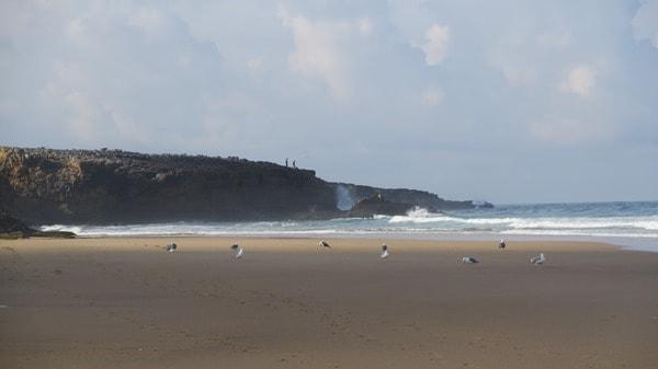 02_Strand-Portugal-Moewen