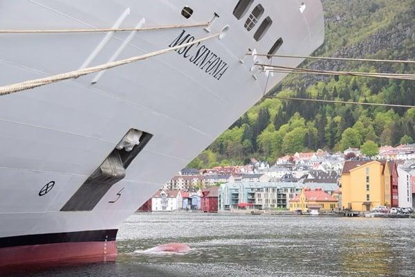 09_MSC-Sinfonia-Bergen-Norwegen