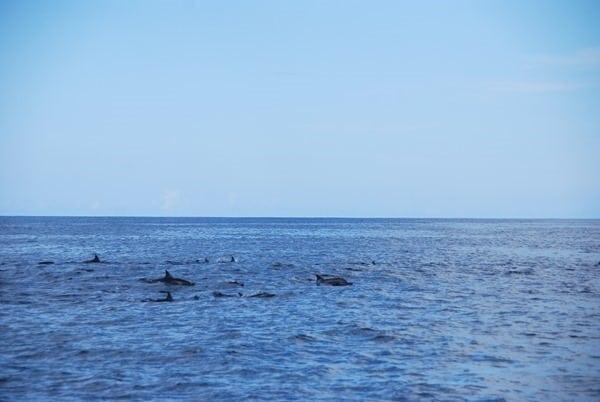 03_Delfine-Delfin-Tour-Mauritius