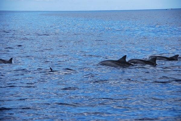 06_Delfine-Delfin-Tour-Mauritius