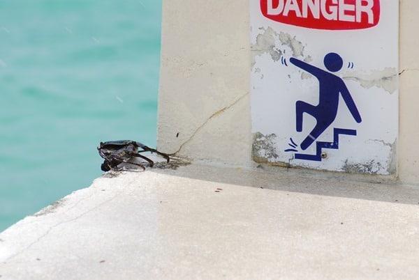 08_Malediven-Urlaub-Krabbe-in-Gefahr
