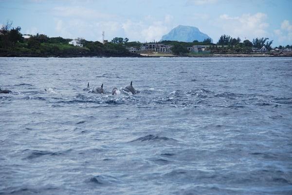 09_Delfine-Delfin-Tour-Mauritius-Ufer