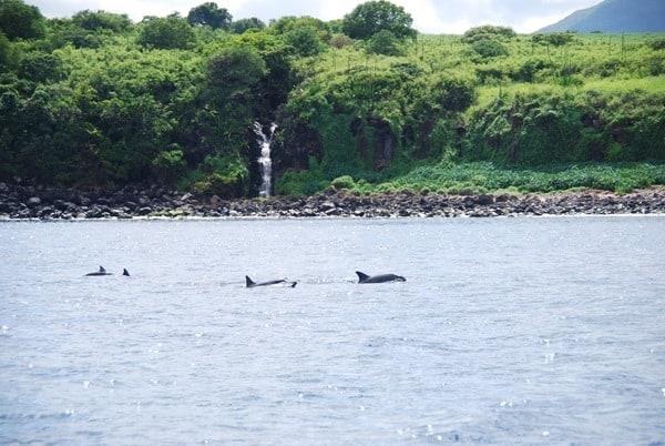 12_Delfine-Delfin-Tour-Mauritius-Ufer