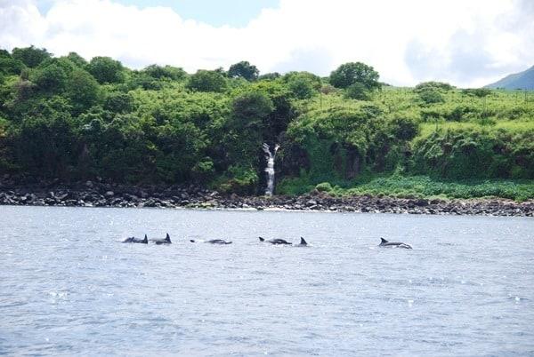 15_Delfine-Delfin-Tour-Mauritius