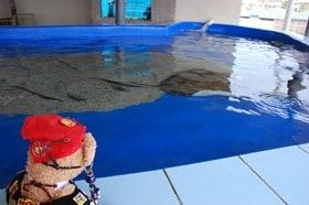 15_Jack-Bearow-Rochen-Curacao-Sea-Aquarium
