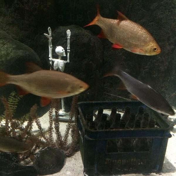 SeaLife Muenchen Isar Aquarium Piratensommer Augustiner Bier