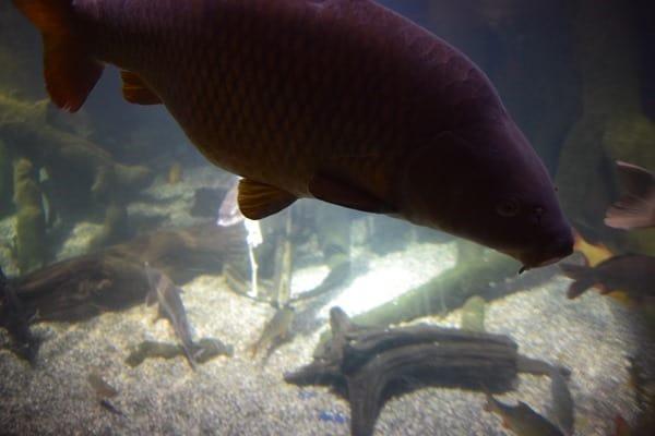 Donaudelta Fische Aquarium SeaLife Muenchen