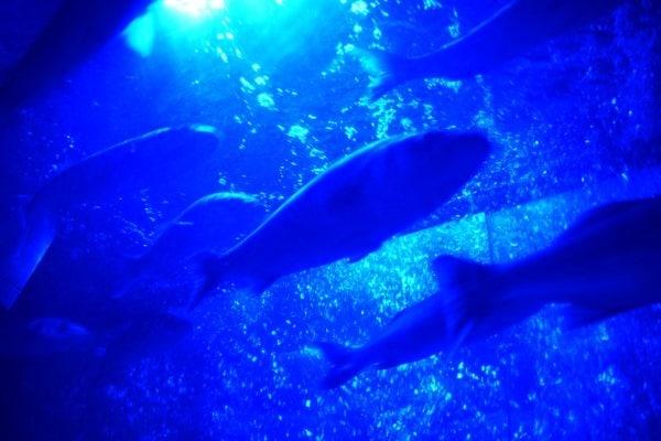 Schwarmfische SeaLife Muenchen Aquarium