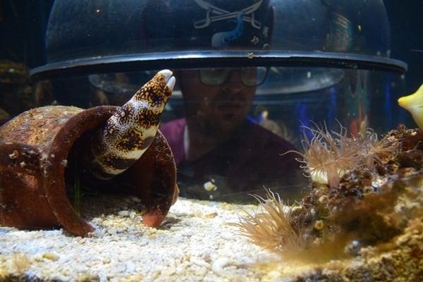 09_Unterwasserwelt-erforschen-SeaLife-Muenchen-Piratensommer