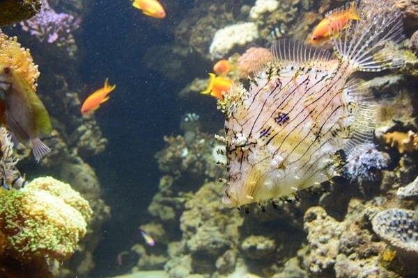 10_Meerwasser-Salzwasser-Aquarium-SeaLife-Muenchen