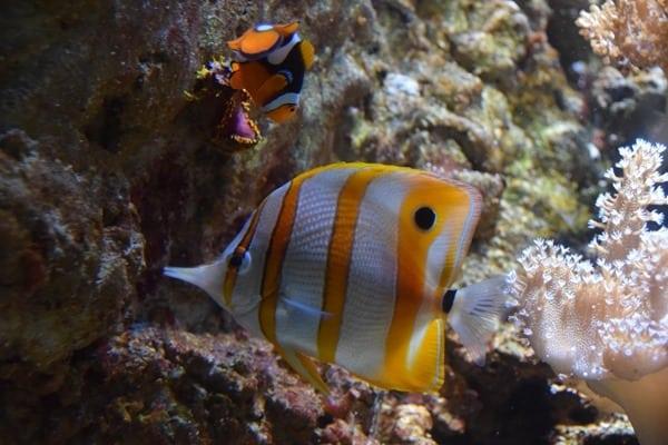 12_Meerwasser-Salzwasser-Aquarium-Clownsfisch-Nemo-SeaLife-Muenchen