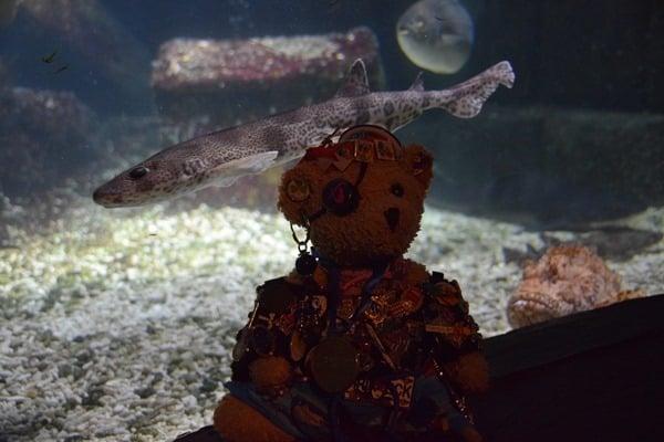 14_Jack-Bearow-Schatzkiste-SeaLife-Muenchen-Piratensommer