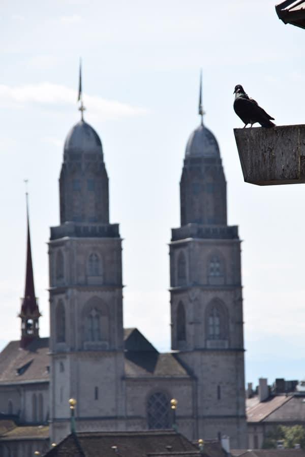 14_Taube-Grossmuenster-Zuerich-Schweiz