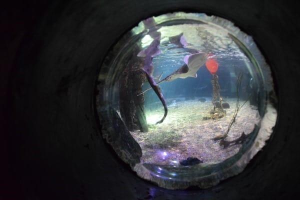 Einblicke Unterwasser SeaLife Muenchen