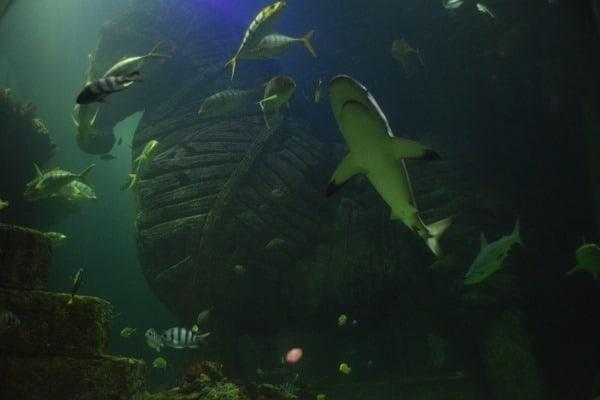 Haifische Trojanisches Pferd SeaLife Muenchen