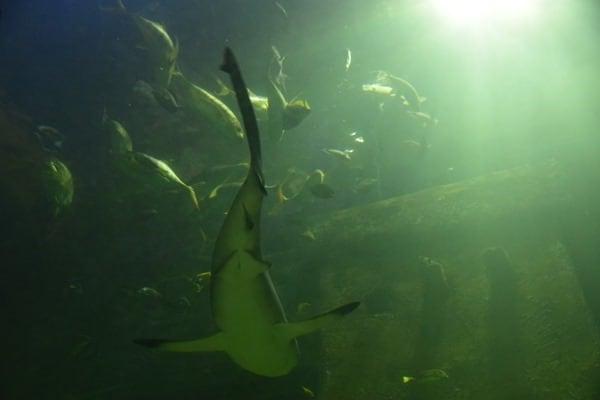 Haifische Aquarium SeaLife Muenchen