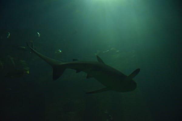 23_Haifisch-Aquarium-SeaLife-Muenchen