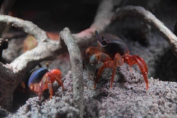 Krebse SeaLife Muenchen