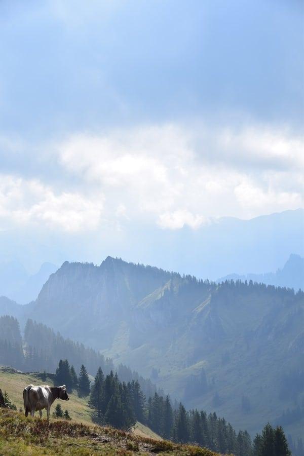 23_Baumgarten-Bregenzerwald-Bezau-Vorarlberg-Oesterreich