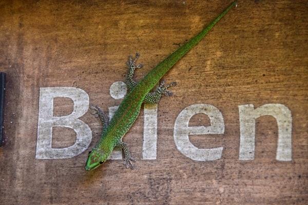 08_Gecko-Plantage-La-Plane-St.-Andre-Mahe-Seychellen