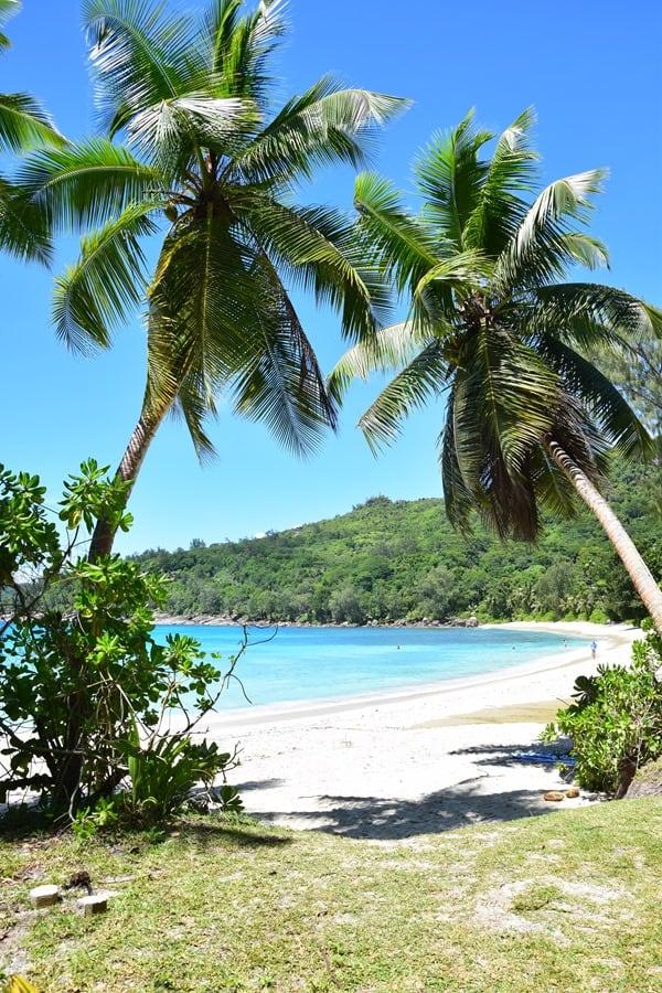 11_Palmen-Anse-Takamaka-Chez-Batista-Mahe-Seychellen