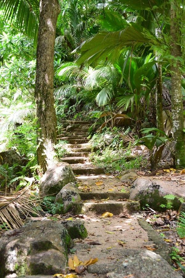 20_Pfad-Urwald-Dschungel-Vallee-de-Mai-Praslin-Seychellen