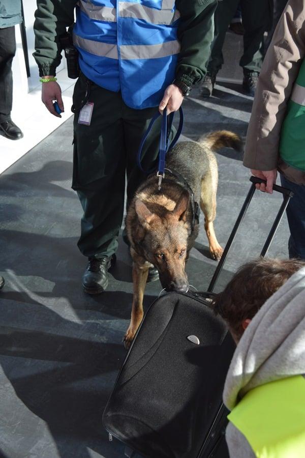 24_Zoll-Spuerhund-Pitt-Deutscher-Schaeferhund-Einsatz-Probebetrieb-Satellit-Terminal-2-Flughafen-Muenchen