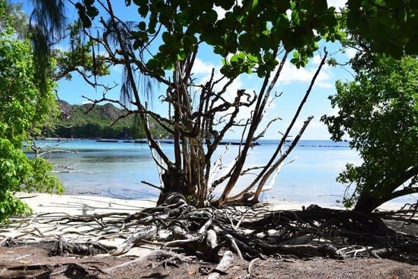 13_Naturstrand-im-Naturschutzgebiet-Marine-National-Park-Curieuse-Seychellen