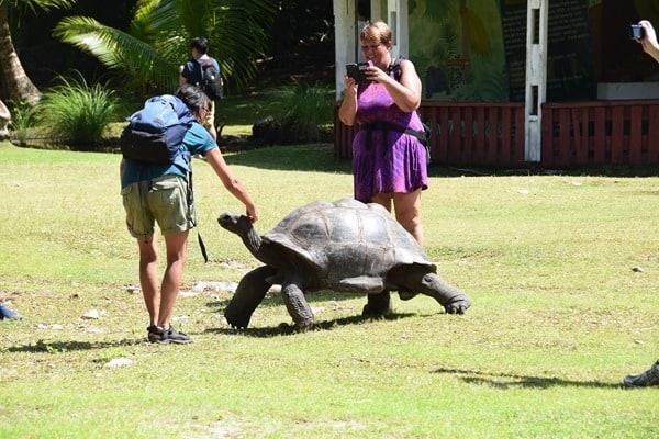 21_Riesenschildkroete-Naturschutzgebiet-Marine-National-Park-Curieuse-Seychellen