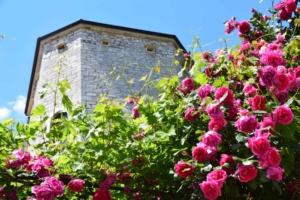 000_Fruehling-in-Istrien-Bale-Kroatien