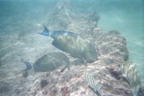 17_Schnorcheln-Hanauma-Bay-Oahu-Hawaii