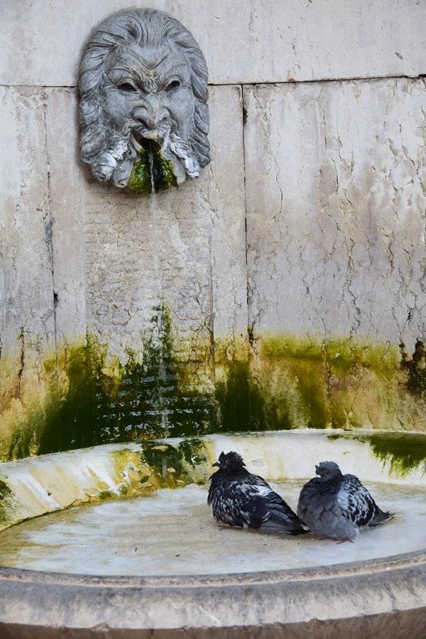 13_historischer-Brunnen-an-der-Piazza-Indipendenza-als-Vogelbad-in-Verona-Italien