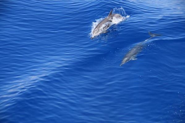 07_Whalewatch-Imperia-Delfine-im-Pelagos-Schutzgebiet-Mittelmeer-Ligurien-Italien