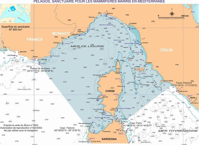 pelagos sanctuary delfin wal schutzgebiet mittelmeer