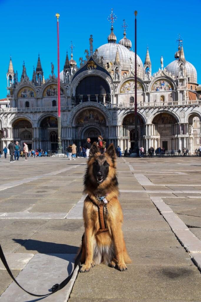 Venedig mit Hund Markusplatz Herbst 2020 Corona