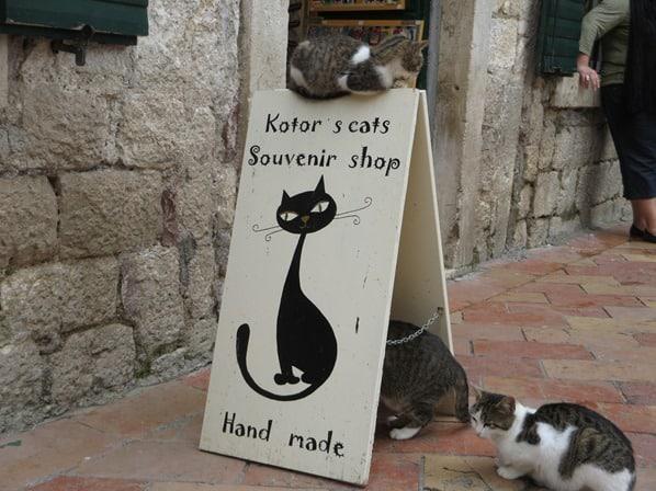 19_Die-Katzen-von-Kotor-Montenegro