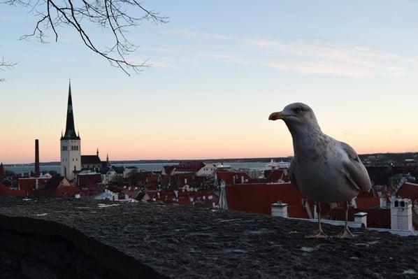 02_Sonnenanaufgang-Moewe-Altstadt-Tallinn-Estland-Ostsee