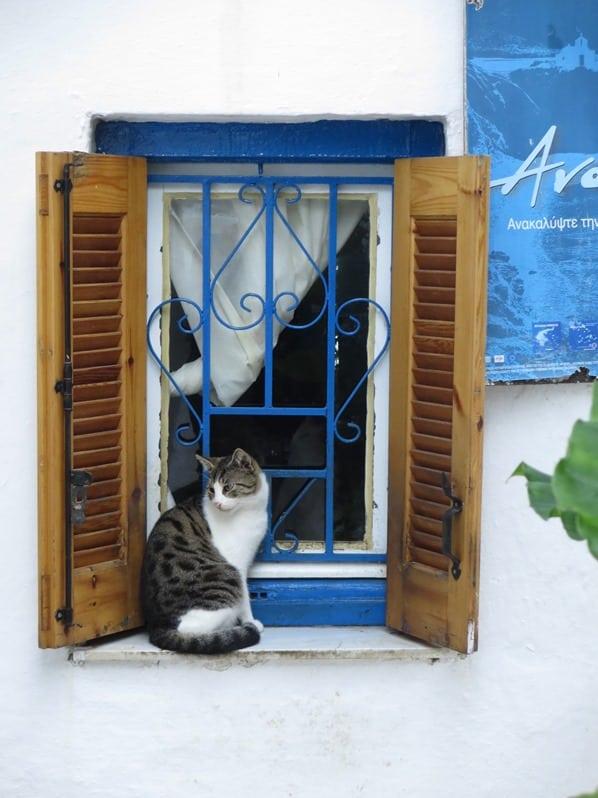 29_Katze-an-einem-Fenster-in-Anafiotika-unterhalb-der-Akropolis-Athen-Griechenland-Kreuzfahrt-Mittelmeer