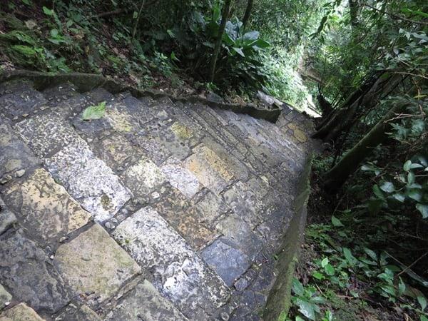 19_Treppen-im-Urwald-Maya-Ruine-Palenque-Mexiko