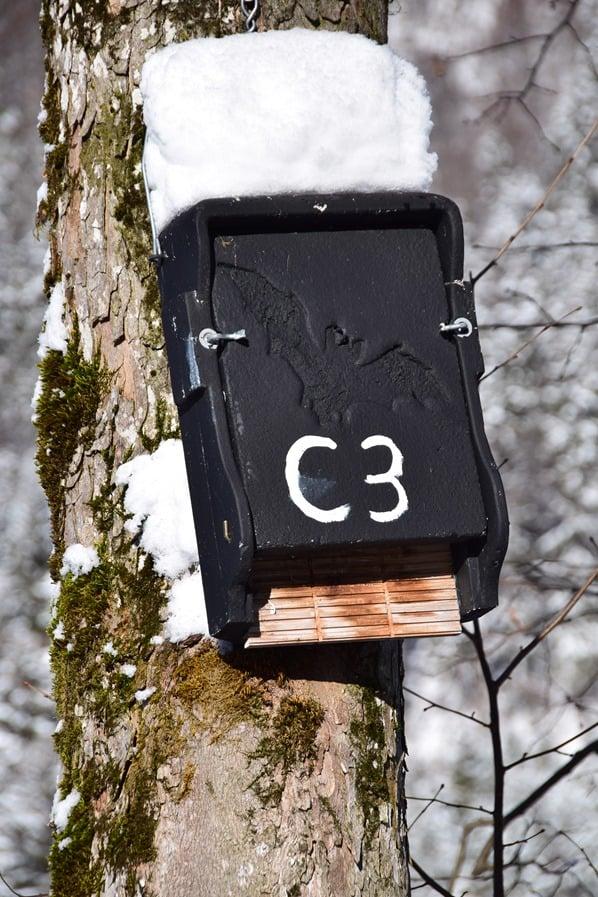 20_Fledermaus-Haus-Rottach-Egern-Tegernsee-Bayern-Deutschland