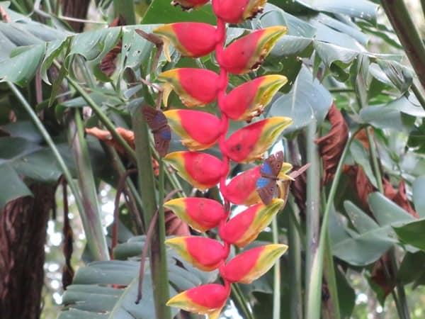 20_Schmetterlinge-Urwald-Maya-Ruine-Palenque-Mexiko