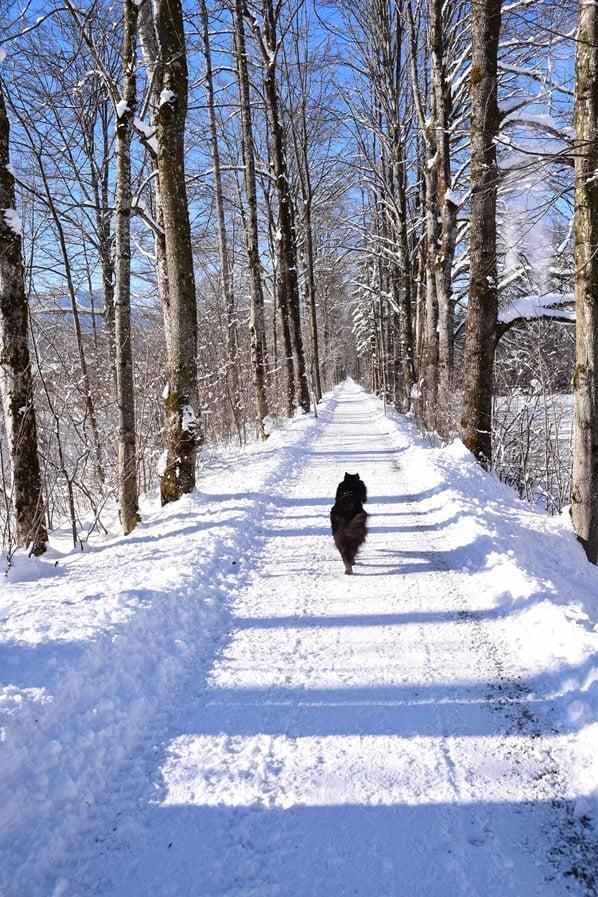 22_Winterwonderland-Wandern-mit-Hund-Rottach-Egern-Tegernsee-Bayern-Deutschland
