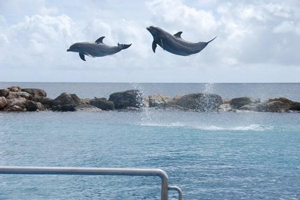 06_Fliegende-Delfine-Aquarium-Curacao-Dolphin-Academy-Karibik