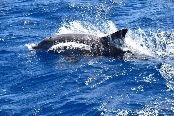 15_Delfin-beim-Islandhopping-Seychellen-Indischer-Ozean
