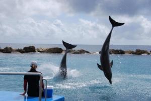 Faszination-Wal-und-Delfinbeoachtung