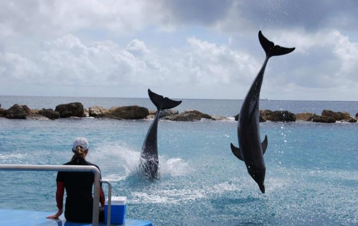 Faszination Wal und Delfinbeoachtung