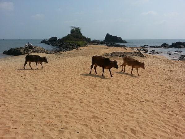 Gokarna-Beach-Indien