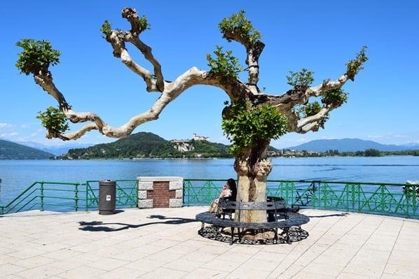 02_Uferpromenade-Baum-Arona-Lago-Maggiore-Italien