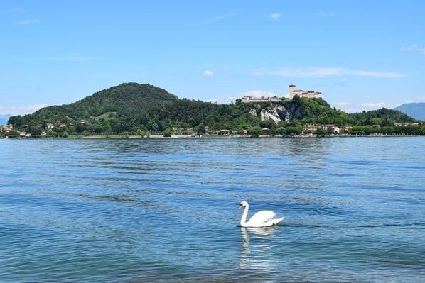 03_Uferpromenade-Burg-Angera-Schwan-Arona-Lago-Maggiore-Italien
