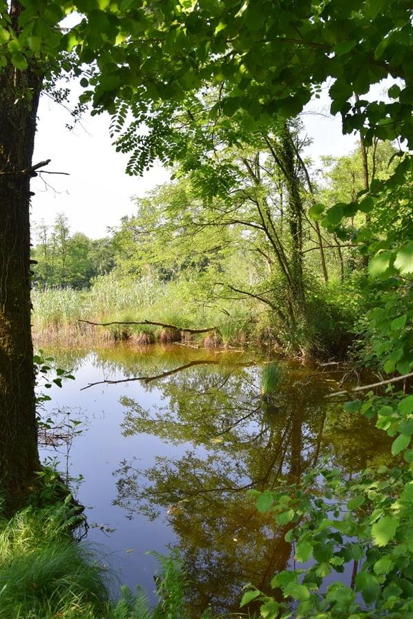 09_Teich-Naturpark-Parco-Naturale-Lagoni-di-Mercurago-Arona-Lago-Maggiore-Italien